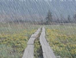下雨天,怎么办